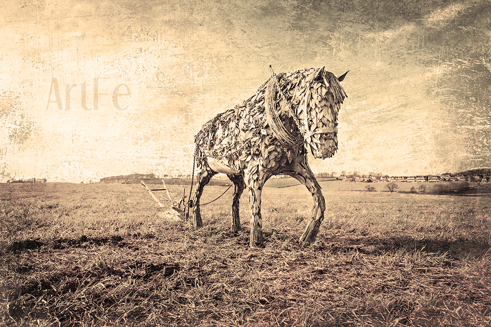 Clydesdale-1001 aged web